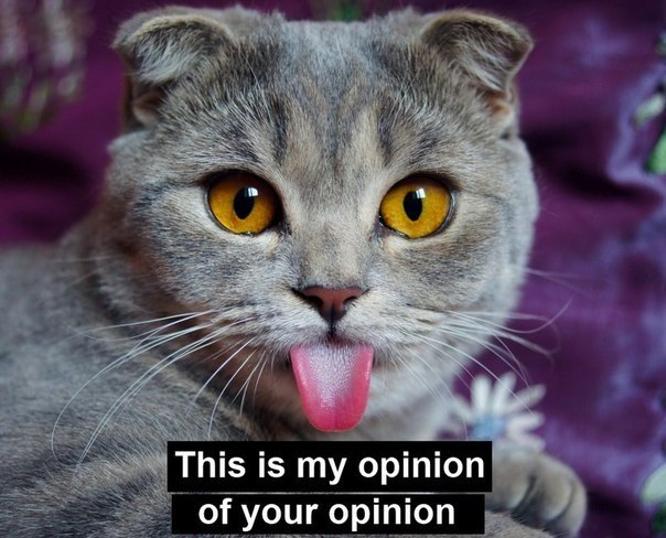This is my opinion of your opinion