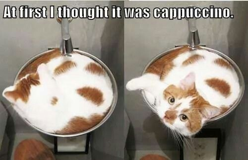 At first i thought it was cappuccino