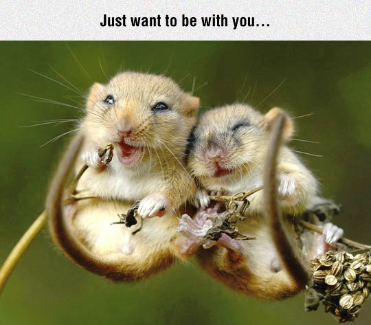 Just want to be with you...