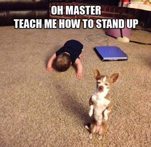 oh master teach me how to stand up