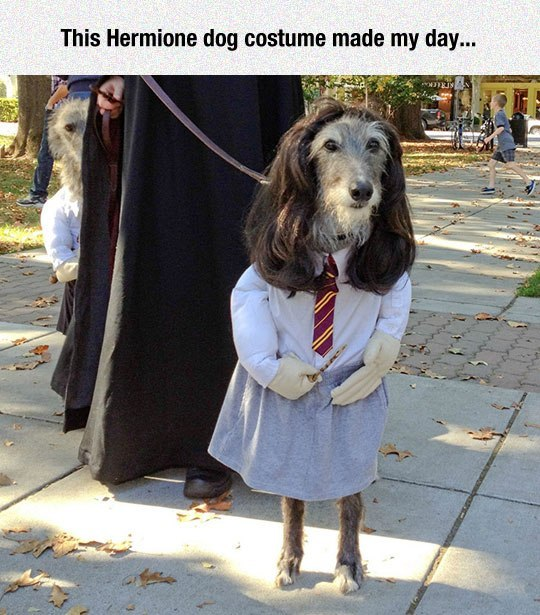 This Hermione dog costume made my day...