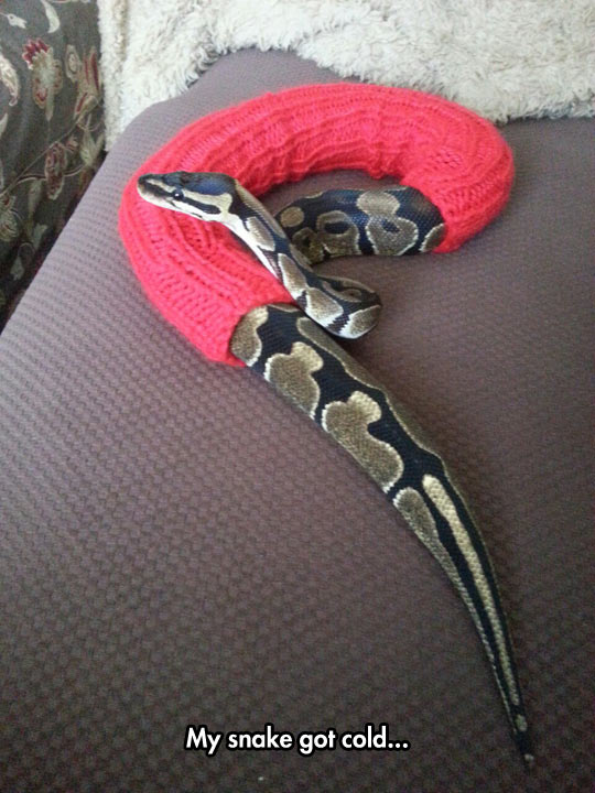 My snake got cold...