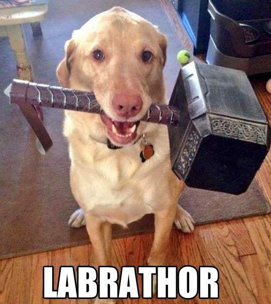 Image may contain: Labrathor - Myspace Photo