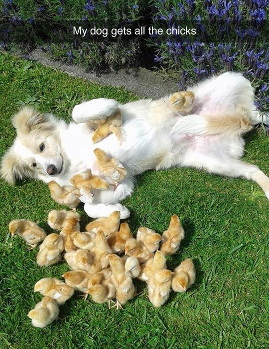 My dog gets all the chicks - Myspace Photo