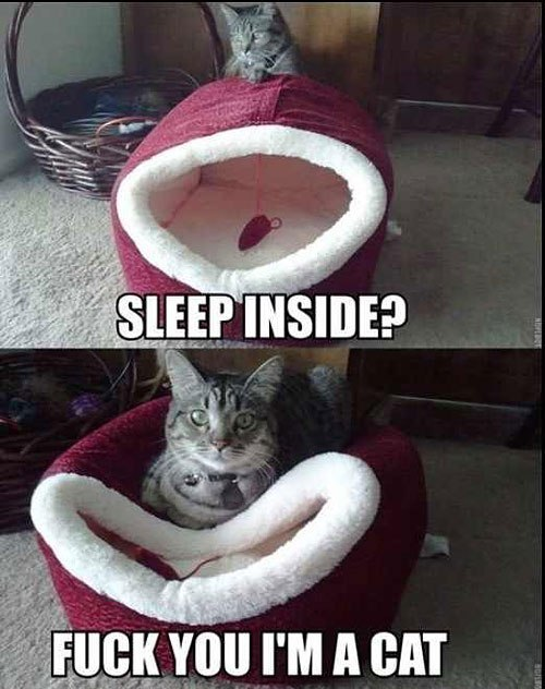 Sleep inside?