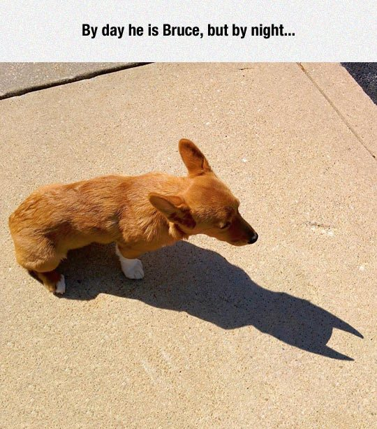 Image may contain: By day he is Bruce, but by night... - Myspace Photo