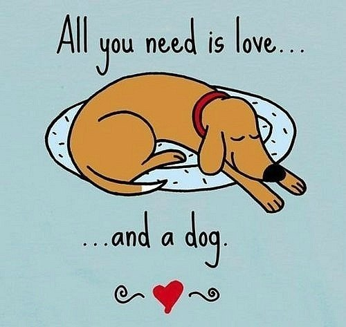 All you need is love.. and a dog