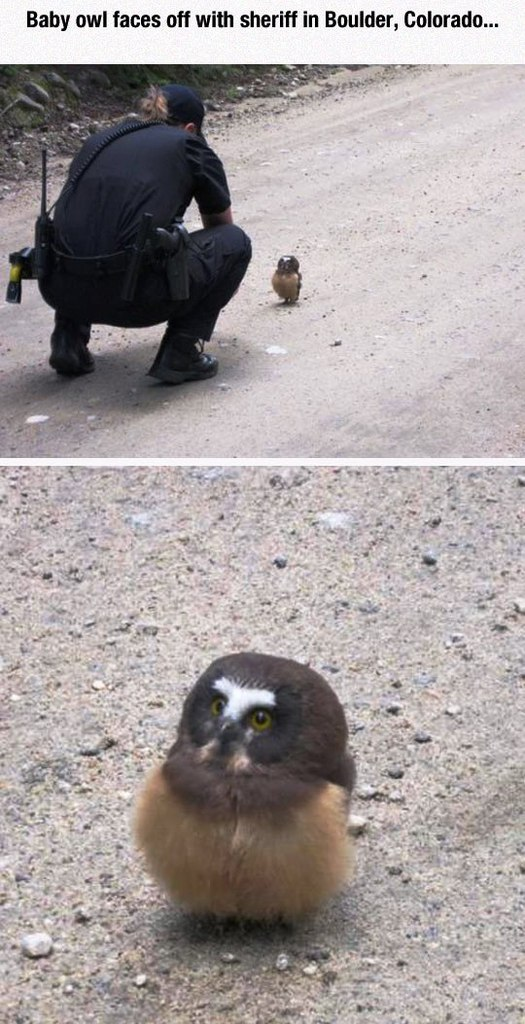 Image may contain: Baby owl faces off with sheriff in Boulder,Colorado - Myspace Photo