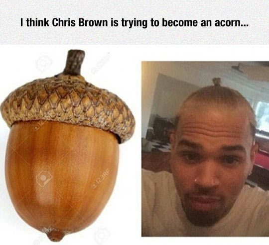 I think Chris Brown is trying to become an acorn... - Myspace Photo