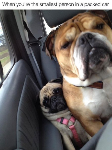 When you're the smallest person in a packed car