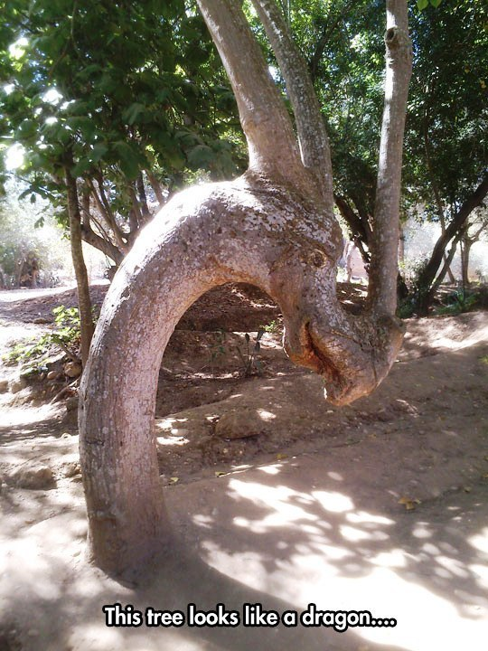 This tree looks like a dragon..