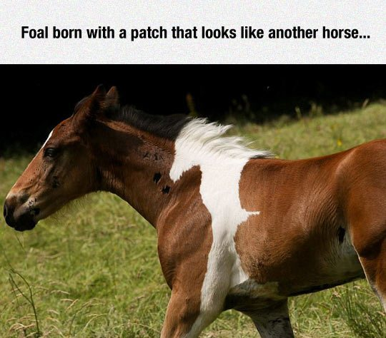 Foal born with a patch that looks like another horse...