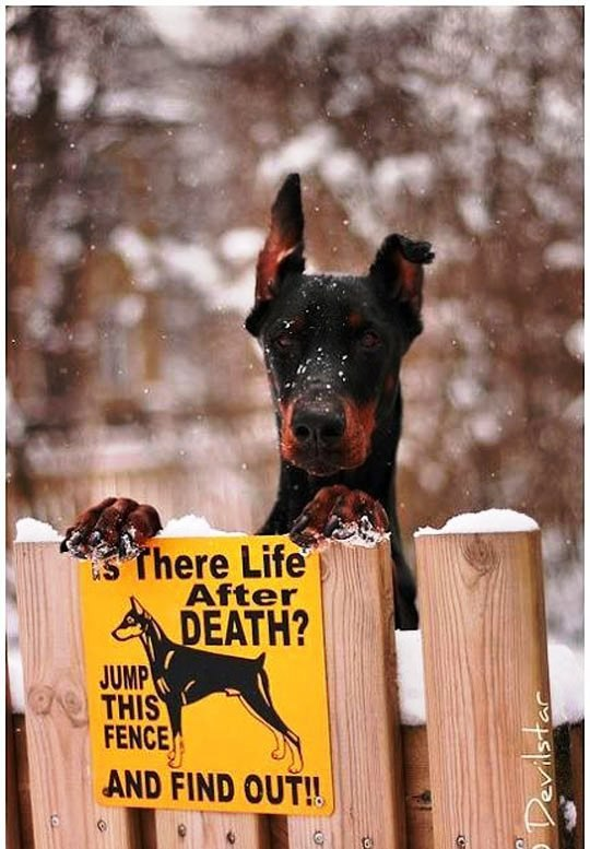 Image may contain: Is There Life After Death? Jump This Fence and Find Out! - Myspace Photo