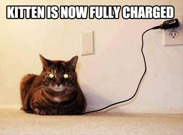 Kitten is now fully charged