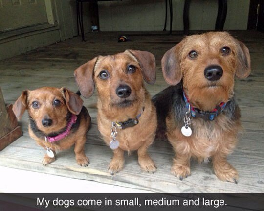 My dogs come in small. medium and large. - Myspace Photo