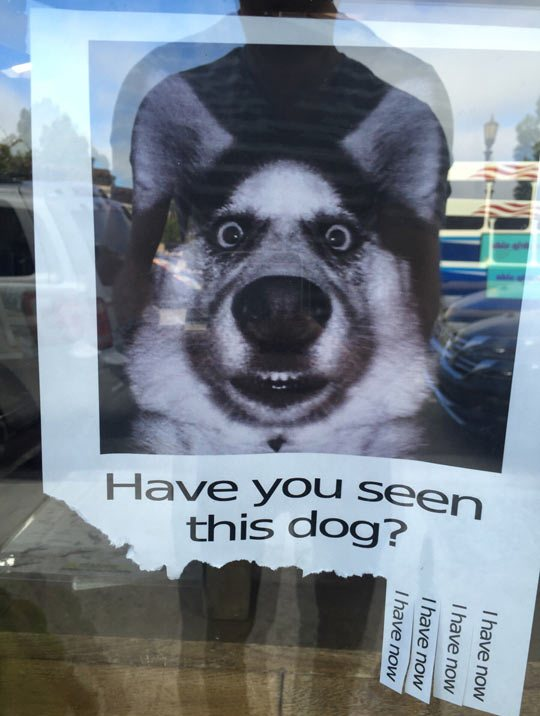 Have you seen this dog? - Myspace Photo