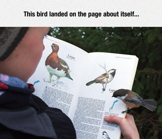 This bird landed on a page about itself