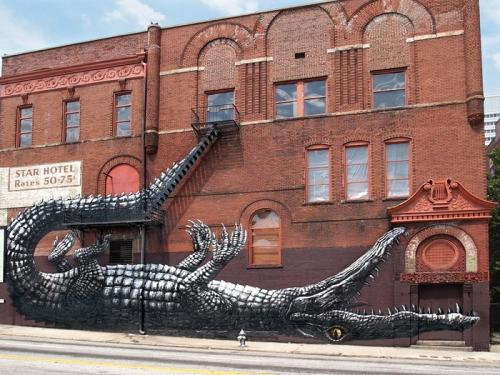 ROA, Alligator, Atlanta, Georgia