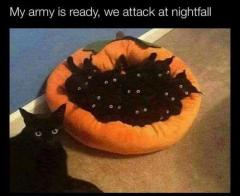 My army is ready, we attack at nightfall