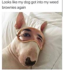 Looks like my dog got into my weed brownies again