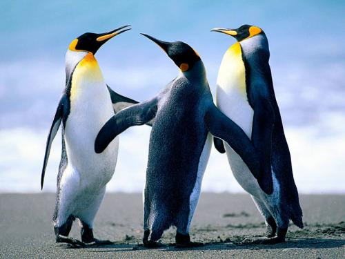 Today is World Penguin Day!