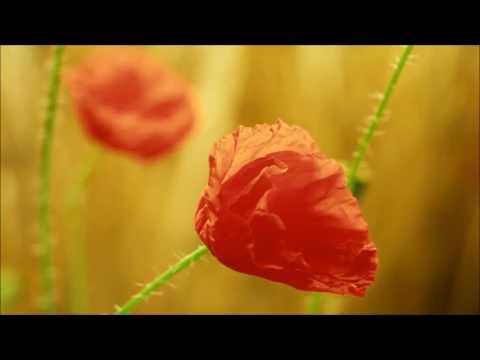 Nagin Been Music. Dj Remix. Full HD._Ameen Nabi.12