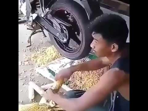 Unique peeling corn using motorcycle tires