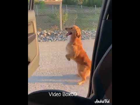Cute a dog Kiki challenge lol , so cool ߘ