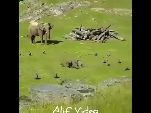 Funny elephant baby playing with bird