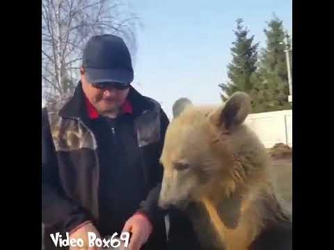 Dog mix bear species